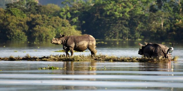 85% Of Kaziranga National Park Under Water As Second Bout Of Floods Hit Assam This