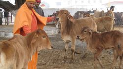 415 Children Died In Gorakhpur Since August, But Cows Are CM Adityanath's