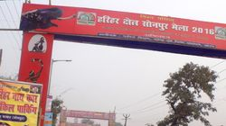 No Cash Cows At Sonepur Cattle Fair After