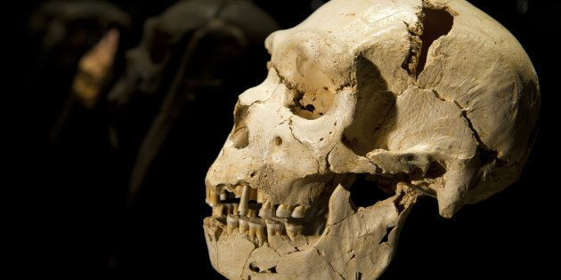 The cranium and mandible of Homo heidelbergensis (500,000 years ago) is seen at the Museum of Human Evolution...