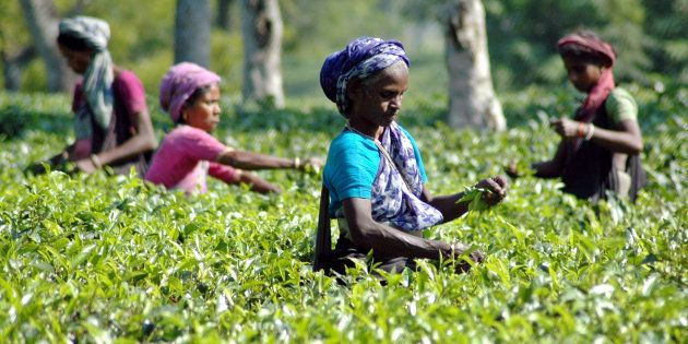 Hailakandi Becomes First District In Assam To Pay Tea Workers Via Bank