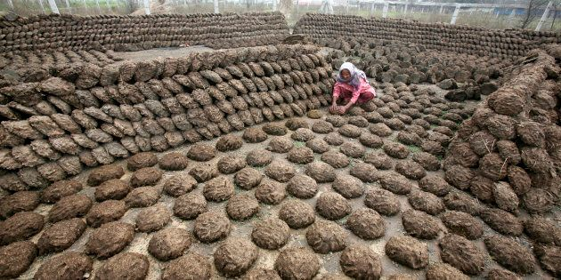 Remember That Bizarre Amreli Municipality Order To Restrict Cattle Dung At 3 Kg? That's Not