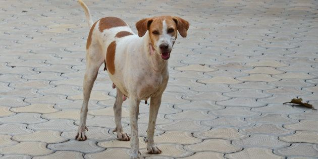 31 Dogs At A Mohali Shelter Attacked With Acid And