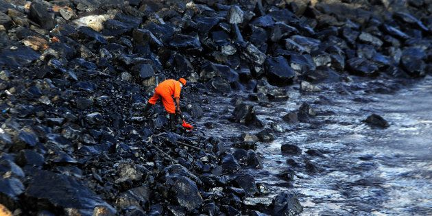 Ennore Oil Spill: Fishermen Stand Waist Deep In Toxic Waters, Remove Black Sludge With