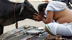 VHP Demands Nationwide Ban On Cow
