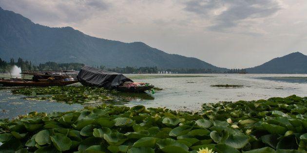 SRINAGAR, KASHMIR, INDIA - SEPTEMBER 7: Boats are moored to the bank of deserted Dal lake on September...