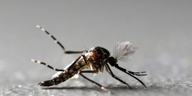 No Need For Awareness Campaign, Gujarat Authorities Say After WHO Confirms 3 Zika Cases In