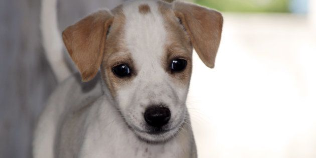 Delhi Man Chops The Legs Of A Stray Puppy Who Accidentally Wandered Into His