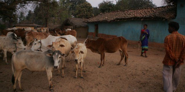 India's Beef And Leather Exports Likely To Suffer Due To Centre's Newly Introduced Cattle Trade Ban