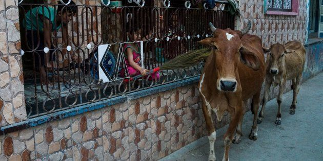 Madras High Court Grants 4 Week Stay On Centre's Cattle Slaughter