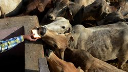 Meghalaya BJP Leaders Threaten To Quit Over Centre's Cattle Trade Ban