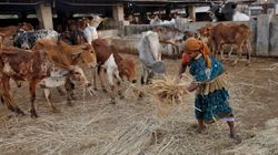 How States Have Pushed Back Against The Centre's Ban On Sale Of Cattle For