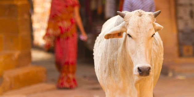 Rajasthan HC Wants Death Penalty For Cattle Slaughter But They Aren't The First To Make Strange Demands...