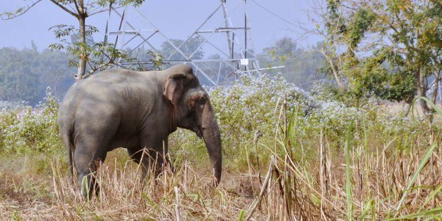 Four Trampled To Death By An Elephant In The Outskirts Of