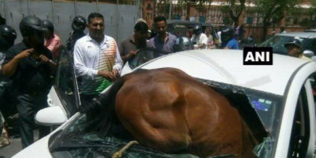 Horse Smashes Through Car's Windshield In Jaipur, Gets Stuck