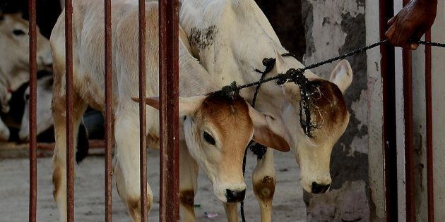 BJP Leader Says Brahmins Ate Beef Before India Became An Agrarian Country, Then Retracts