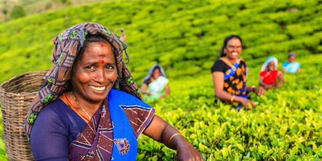 Tamil women plucking tea leaves in Southern