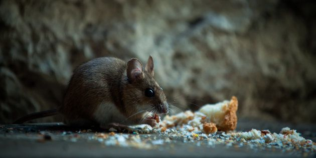 Dead Rat Found In Mid-Day Meal Served At A Govt School In Delhi, Nine