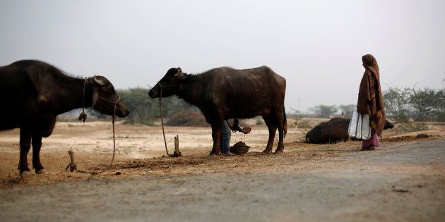 To Exorcise 'Evil Spirit', 17-Year-Old Girl Fed Buffalo Dung In Maharashtra's