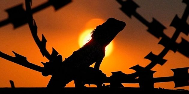 Delhi Zoo's 4 Monitor Lizards Die Of 'Shock' After Being Taken Out During Their Hibernation