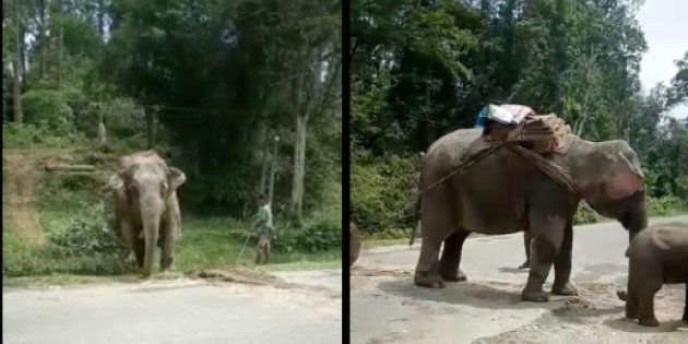 This Video Of An Elephant Struggling To Drag A Huge Log In Assam Is