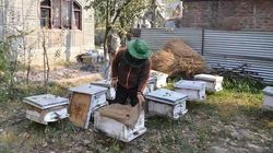 How Kashmiri Farmers Are Supplementing Their Incomes With