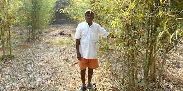 Bamboo Farming Is Changing The Rural Economy In Konkan | HuffPost India