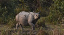 BBC Faces Five-Year Ban For Its 'Breach Of Trust' In Kaziranga