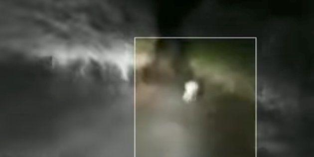 Four Held In Gujarat's Junagadh For Chasing Lion Cub Near Gir Wildlife