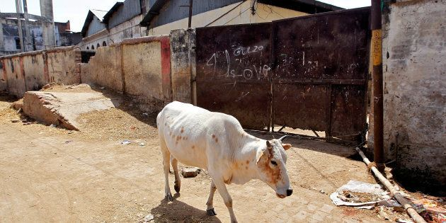 A cow walks past a closed slaughterhouse in Allahabad, India March 28, 2017. REUTERS/Jitendra