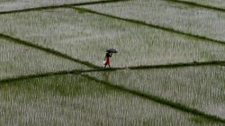 India May Face Weak Monsoon In 2017, Thanks To The El-Nino