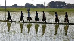 The Decade Ahead Of Low Farm Prices: Are India And China