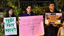 Delhi HC Puts Temporary Block On Plans To Cut 16,500 Trees In The Capital For Housing