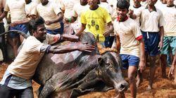 Nobody Should Have A Problem With Jallikattu, Says Venkaiah
