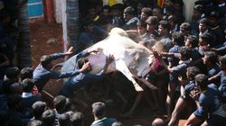 Big Blow To Ardent Supporters Of Jallikattu As Apex Court Refuses To Revisit Verdict Before