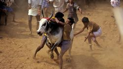 Tamil Nadu Village Holds Jallikattu Festival In Defiance Of Supreme Court
