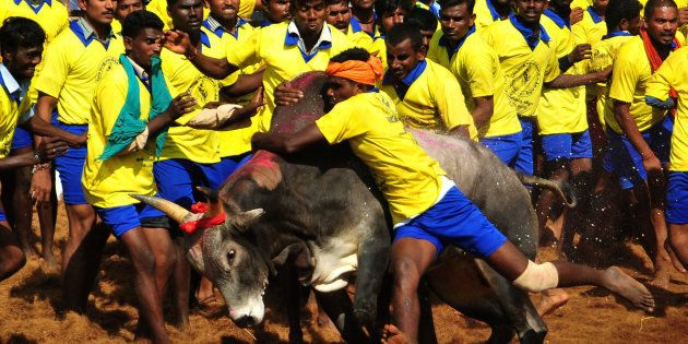 Action Would Be Taken Against Those Defying Supreme Court's Order On Jallikattu, Warns