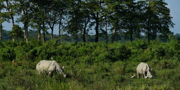 Rhinos at Assam's Kaziranga National Park in a file