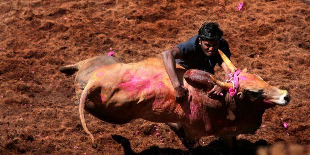 How Misogyny And Lies Define The Pro-Jallikattu