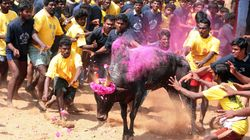 Massive Protest In Tamil Nadu Against Jallikattu