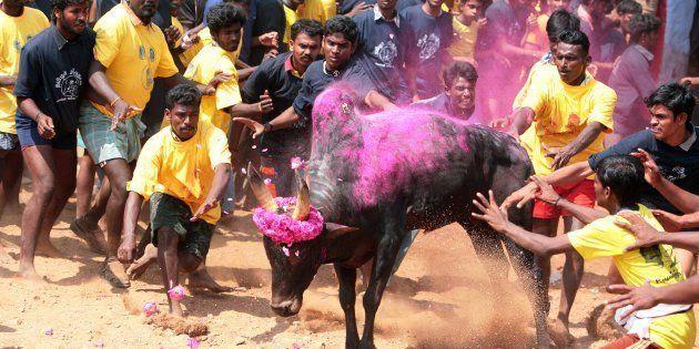 Massive Protest In Tamil Nadu Against Jallikattu