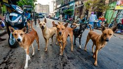 SC Slaps Down Outrageous Petition Demanding Stray Dogs In India Be 'Totally