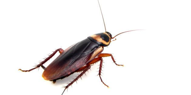 'He Started Using Cockroaches To Get Me Into Bed,' Bangalore Woman Files Complaint Against Her