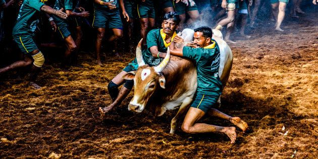 Jallikattu: Viswanathan Anand, Sri Sri Ravi Shankar Join Chorus In Support Of The Bull-Taming