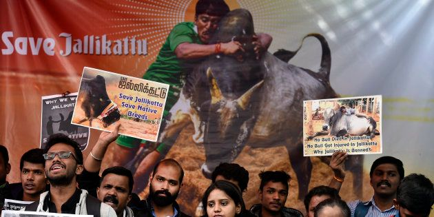 Jallikattu Row: DMK Announces State-Wide 'Rail Roko' Agitation In Tamil Nadu In Support Of The Bull-Taming