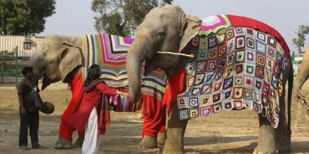 Rescued Elephants In Mathura Get Jumbo Sized Sweaters To Stay Warm This