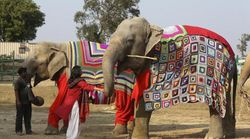 NGO Workers In Mathura Are Knitting Sweaters For Elephants To Save Them From The Chilly