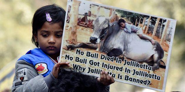 Supreme Court Delays Verdict On Jallikattu By Another