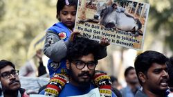 Supreme Court Delays Verdict On Jallikattu By Another
