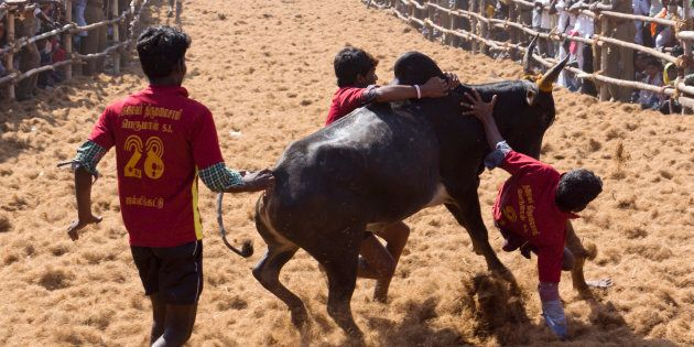Ordinance To Allow Jallikattu Cleared, Tamil Nadu CM Thanks Narendra